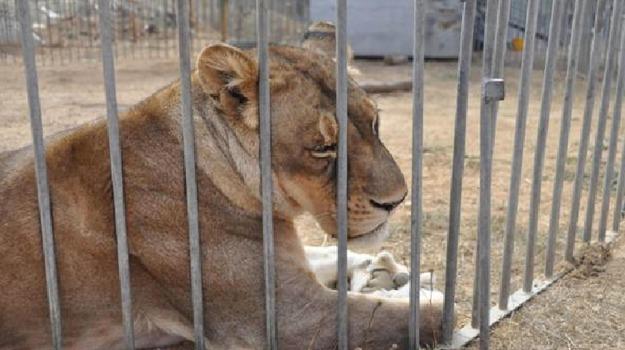 animali, maltrattati, sequestro, Sicilia, Società
