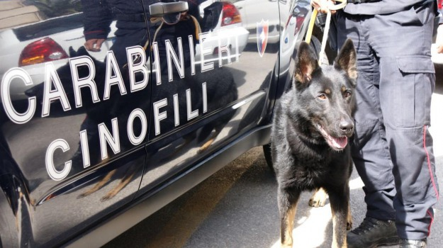 arresto, cane, marijuana, Ragusa, Cronaca