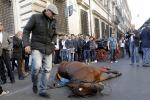 Cavallo si accascia in pieno centro di fronte a centinaia di curiosi. Foto