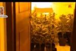 Scoperta piantagione di droga a Carini: un arresto