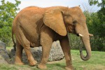 Uccisi ogni giorno 70 elefanti e tre rinoceronti