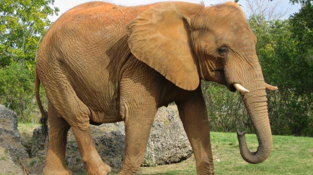africa, bracconaggio, caccia, elefanti, rinoceronti, wwf, Sicilia, Mondo