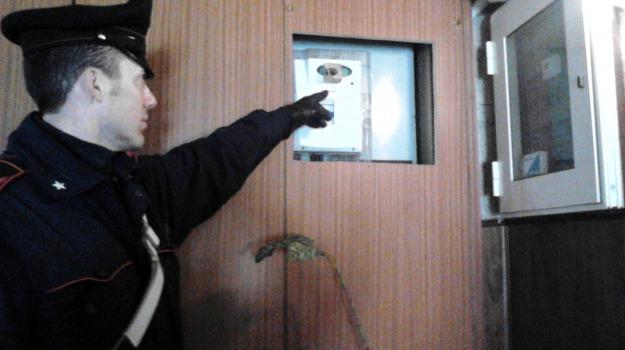carabinieri, controlli, droga, spaccio, Catania, Cronaca