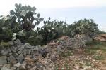 Santa Margherita del Belice, torna la Sagra del Fico d'india