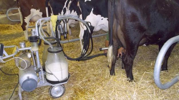 caldo, coldiretti, mucche latte, Sicilia, Società