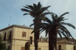 Ribera, ripiantumate le palme a Seccagrande