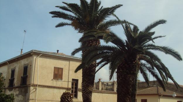 palme, punteruolo, ribera, Agrigento, Cronaca