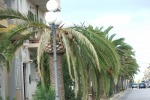 Messina, palme a rischio crollo: predisposta tac per le piante