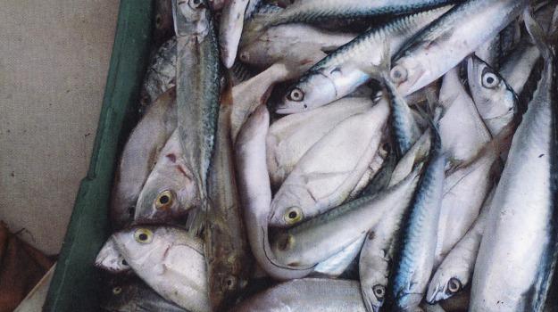 pesce avariato caltanissetta, Caltanissetta, Cronaca