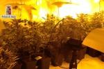Carini, piantagione di marijuana a pochi metri dall'autostrada
