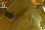 Sparatoria in via Cavour, convalidato il fermo del tunisino: incastrato da un video (Le immagini)