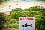 Usa, surfista mette in fuga uno squalo colpendolo con la tavola