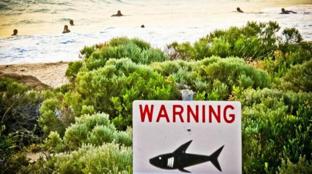 Hawaai, squalo, surfista, USA, Kaelo Roberson, Sicilia, Mondo
