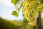 Ad Alcamo vino e tradizioni protagonisti