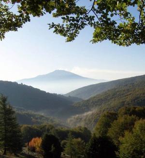 """I """"rifiuti"""" dei boschi siciliani diventano energia: il progetto"""