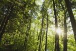 Biodiversità, basterebbe il 2,5% della spesa militare per salvarla