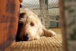 A Pisa un centro per cani donatori di sangue