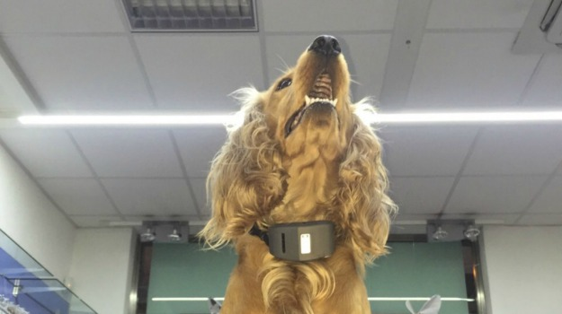 animali, cani, collare, Palermo, Società