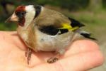 Palermo, sequestrati uccellini protetti a Ballarò