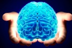 Dieta ricca di grassi può ritardare l'invecchiamento del cervello