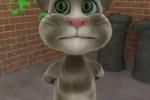 Gattino social sorprende gli internauti: ecco perchè - Video