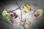"""Dolce o amaro: per ogni gusto il cervello ha neuroni """"specializzati"""""""