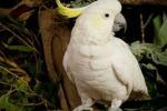Il pappagallo Fred compie 100 anni: auguri anche dalla Regina Elisabetta