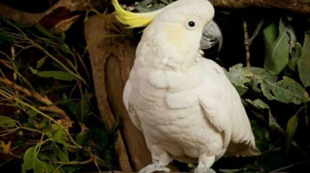 animali, compleanno, festa, pappagallo, record, Regina Elisabetta, Sicilia, Vita
