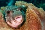 Nel mondo sono oltre 22 mila le specie a rischio