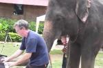 Elefante sente il suono del pianoforte: ecco come reagisce. Il video
