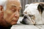 I cani reagiscono alla voce del padrone e ne comprendono le emozioni