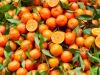 L'Università di Palermo annuncia: dagli agrumi di Sicilia nascerà la nuova plastica biologica