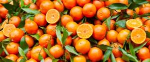 Una potatura con finestre per dare più sole alle arance di Ribera