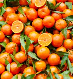 Arance rosse più care, Siracusa e Catania prime per produzione