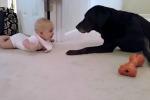 Una bimba impara a gattonare e il cane le dà una dolce ricompensa - il video