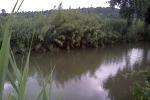 """Furti negli oleodotti, Wwf: """"Decine di animali morti nel fiume Arrone"""""""