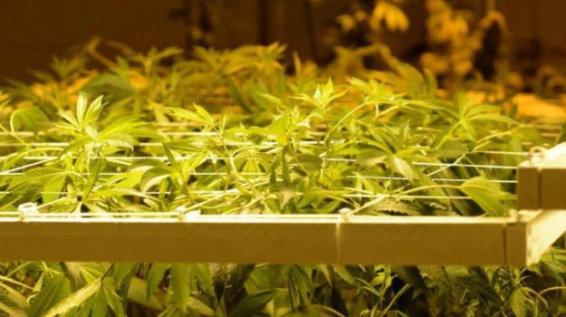 droga, marijuana, operazione, piantagione, polizia, Enna, Cronaca