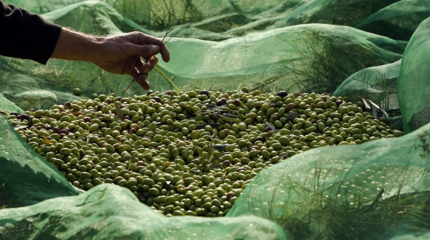 chiaramonte gulfi, cosmetica, olive, Ragusa, Economia