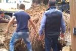 Gela, piantata una nuova palma nel centro storico - Video