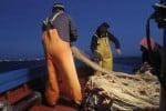 Allarme Mediterraneo, la proposta: stop alla pesca nello Stretto