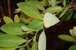 Cocaina salva dai cambiamenti climatici, è la pianta più resistente