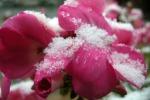 Piante fragili per i cambiamenti del clima, si tema l'arrivo del freddo
