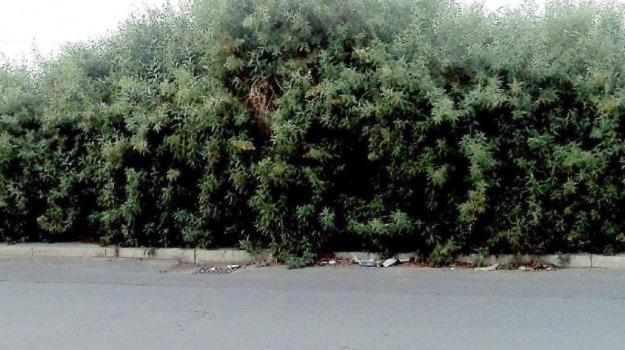lettori, marciapiedi, rifiuti, segnalazioni, sterpaglie, voci dalle città, Palermo, Cronaca