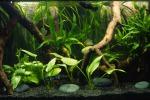 Nell'acqua anche piante e minerali: è l'arredo-natura
