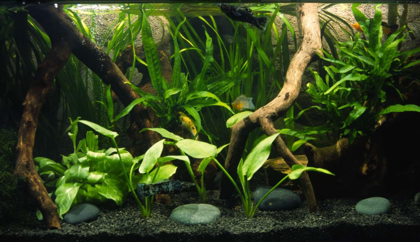 Nell acqua anche piante e minerali l arredo natura for Legni per acquario