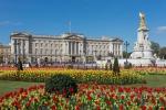 Leoni, rinoceronti, tigri: via 62 trofei da Buckingham Palace