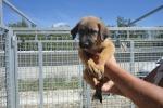 Sciacca, 55 cani dati in adozione