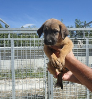 Telecamere in tilt, altri nove cuccioli abbandonati al rifugio di Santa Margherita Belice