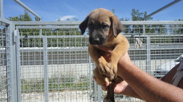 adozioni, cani, Sciacca, Agrigento, Cronaca