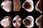 Scoperta nell'oceano Artico una conchiglia di 2 milioni di anni